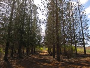 Hike Lanai (1)
